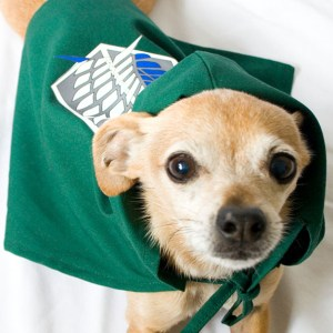 Attack On Titan Survey Corps Dog Cloak Shut Up And Take My Yen : Anime & Gaming Merchandise