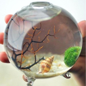 Japanese Moss Ball Aquarium