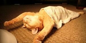 Cat Sleeping Like A Boss