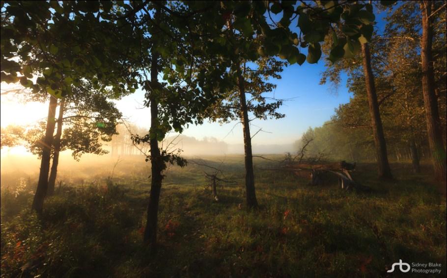 Elk Island Bison Loop Foggy Sunrise