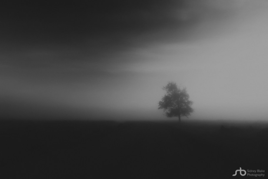 Lone tree along a gravel road during a pea-soup foggy autumn morning at Elk Island National Park, Parks Canada, Alberta landscape.