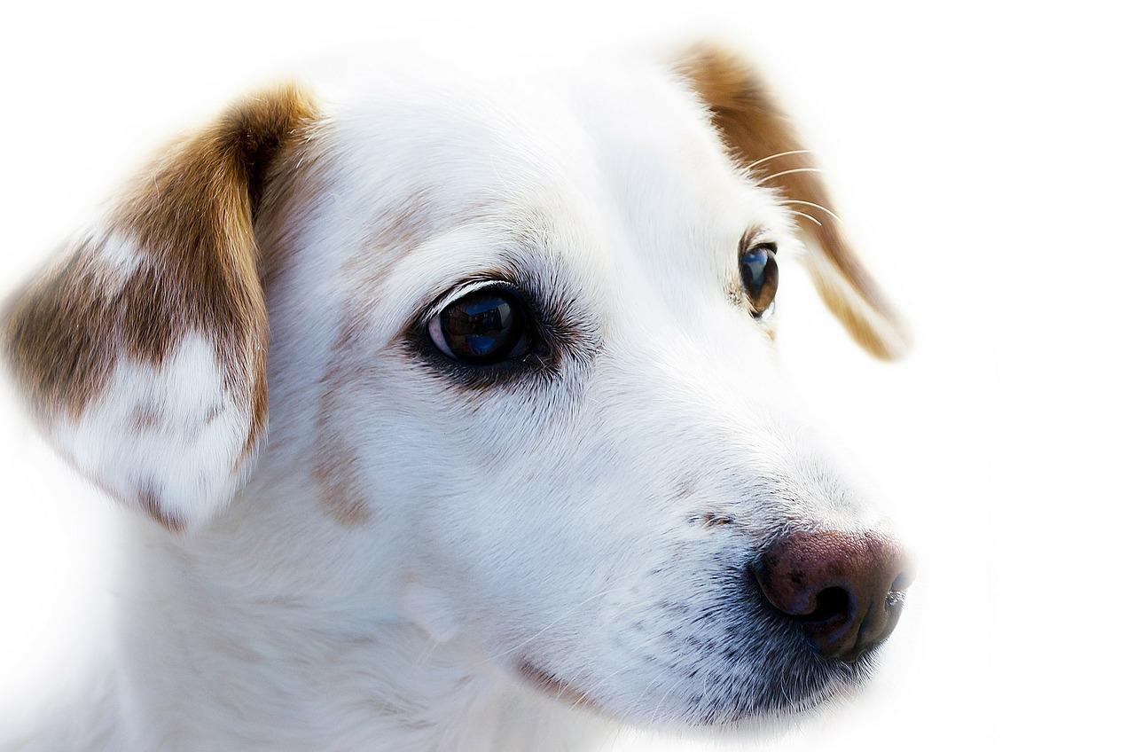Remarkable Dog Names Tool Siege Marketing Dog Name Generator By Breed Dog Name Generator Quiz bark post Dog Name Generator