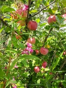 Appels Apples vlindertuin