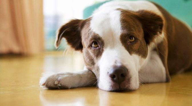 Animais em condomínios – É proibido proibir