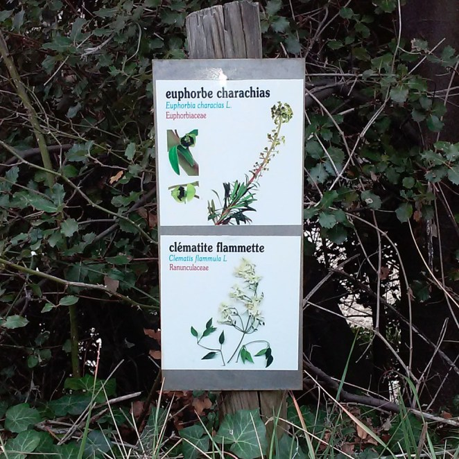 Plaque sentier botanique Montbrison (26)
