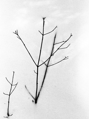branch-in-snow-samll.jpg