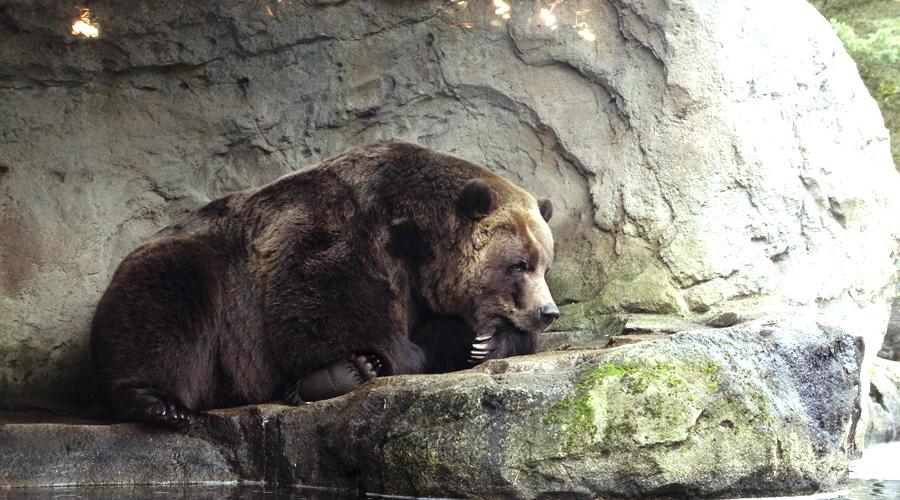 woodland_park_zoo_15
