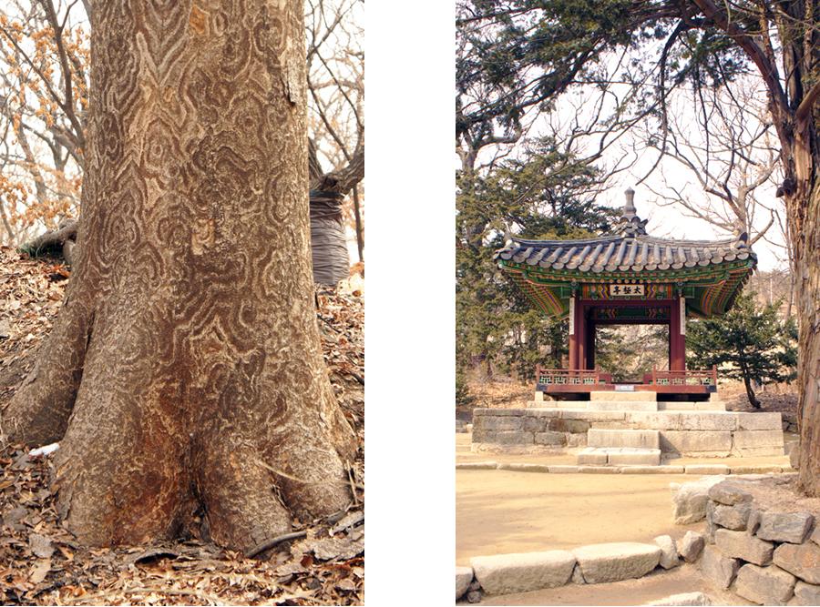 Chang-gyeong-gung-13