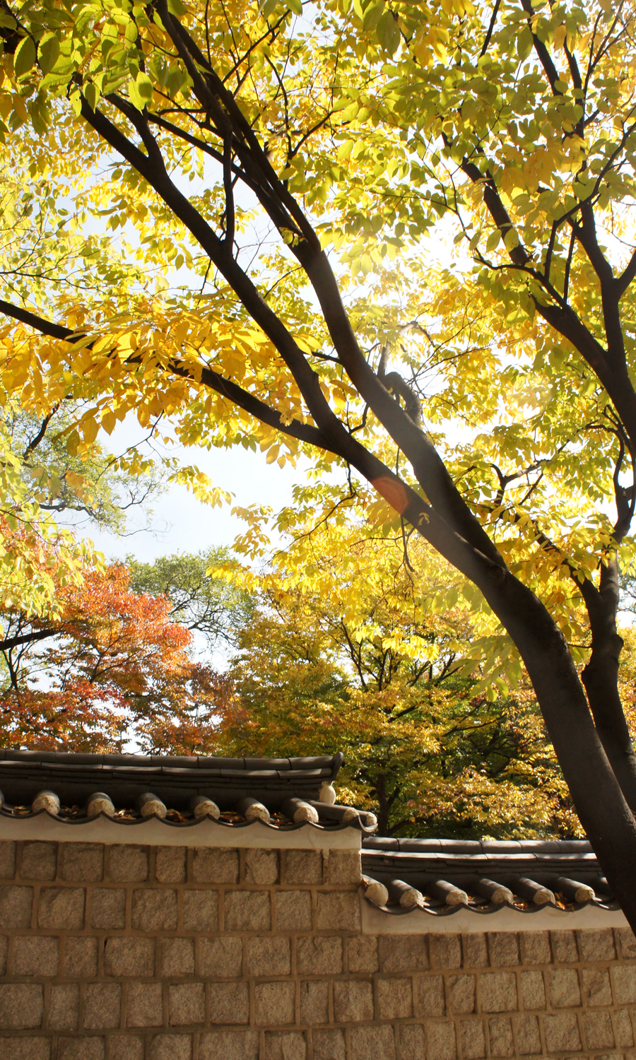 2014-seoul-korea-changdeokgung-palace-secret-garden-biwon-01