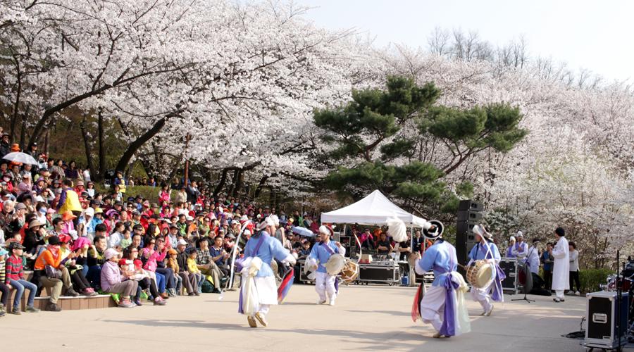 2015-04-11-korea-seoul-ansan-cherry-blossoms-21