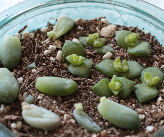 silentlyfree-succulents-how-to-grow-12