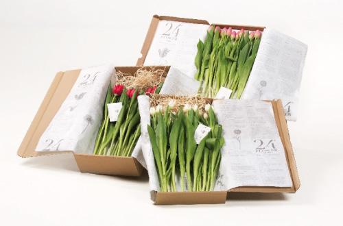 packaging-flores-original-creativo