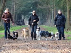 vakantie met honden en eurasier