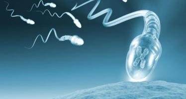 espermatozoide1