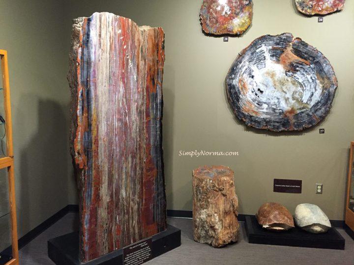 Araucaria log, The Zuhl Museum