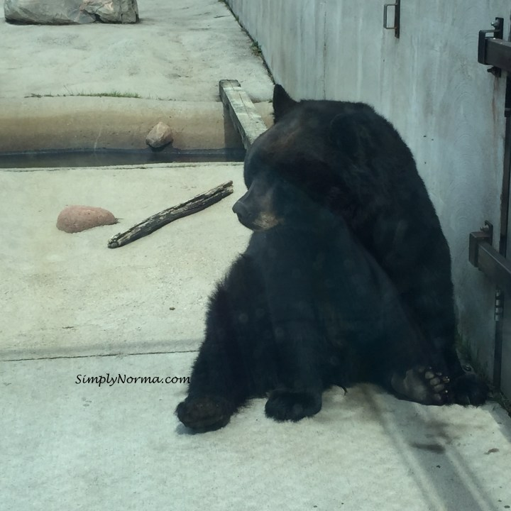 Bears, Pine Grove Zoo