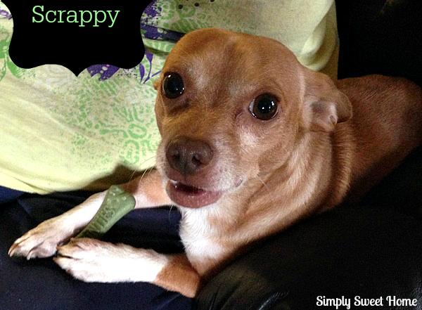Scrappy Dog Treats