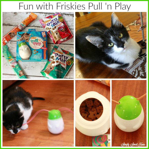 Fun with Friskies Pull 'n Play #MostPlayfulCat