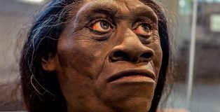 hominin