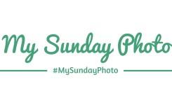 my-sunday-photo