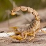 Harina a base de Insectos, Opción sin gluten