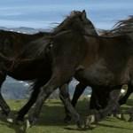 PSOE y PP justifican el maltrato a los animales