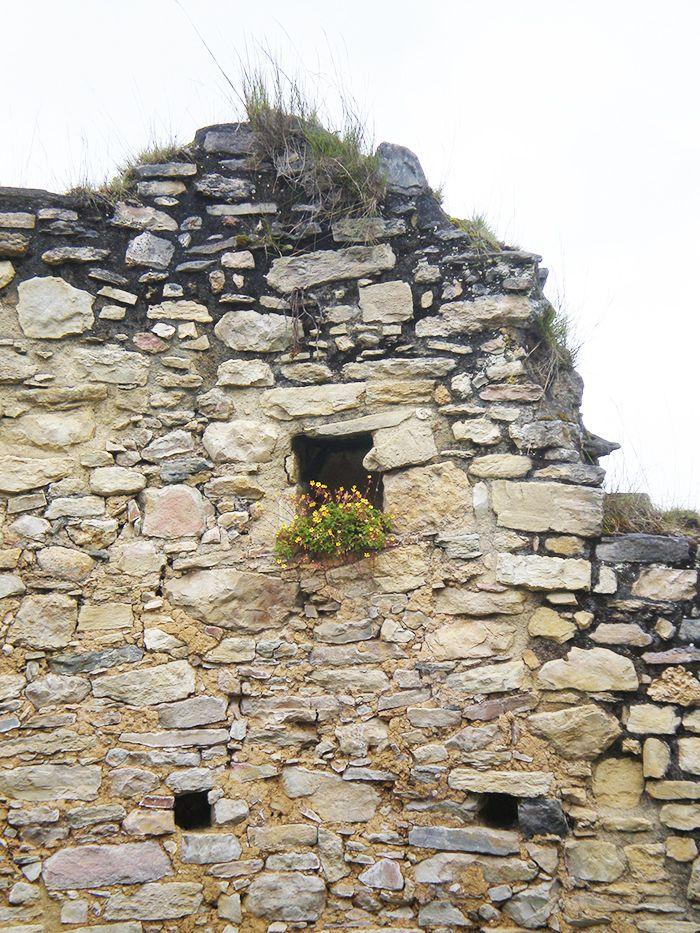 La naturaleza caprichosa en Kuelap Peru
