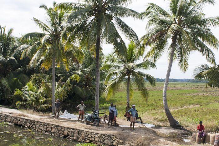 obreros kerala backwater india