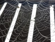mobile-phone-photography-sept14-wet-spiders-web-header