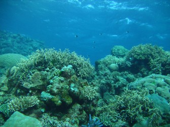 Great Barrier Reef bleaching is just one symptom of ecosystem collapse across Australia