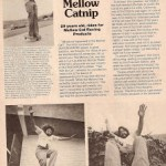 "Quadrinhos do"" Mellow Cat"" e Filme skateboards  MadNess"