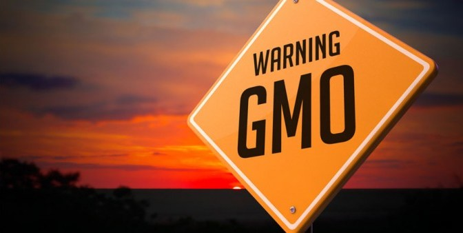 GMOs cause cancer