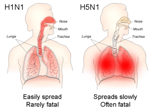 H1N1_versus_H5N1_pathology