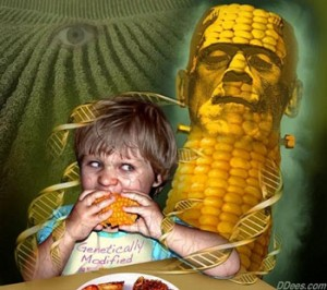 The myth that GMO genes transfer to humans