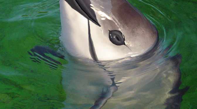 Traditional Chinese medicine kills dolphins