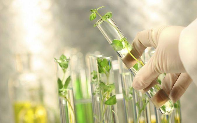 GMO crop pesticide