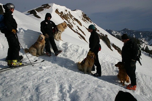 Alpine Meadows rescue dogs