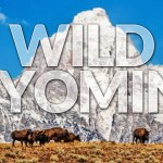 5 Days in Yellowstone and Jackson Hole, Wyoming