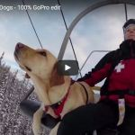Videos: A collection of cute avalanche dogs + puppies