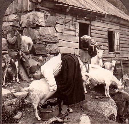 goat-in-norway-1800s