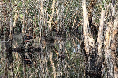 Bunohan swamp