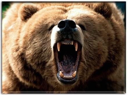 bear007
