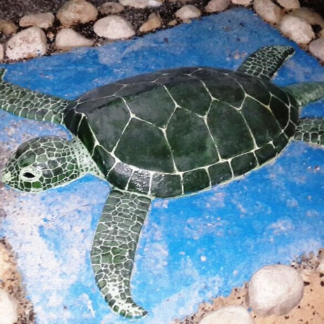 Turtle reserve
