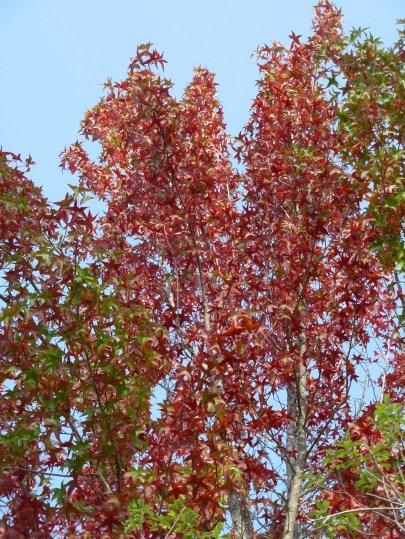 falltree4