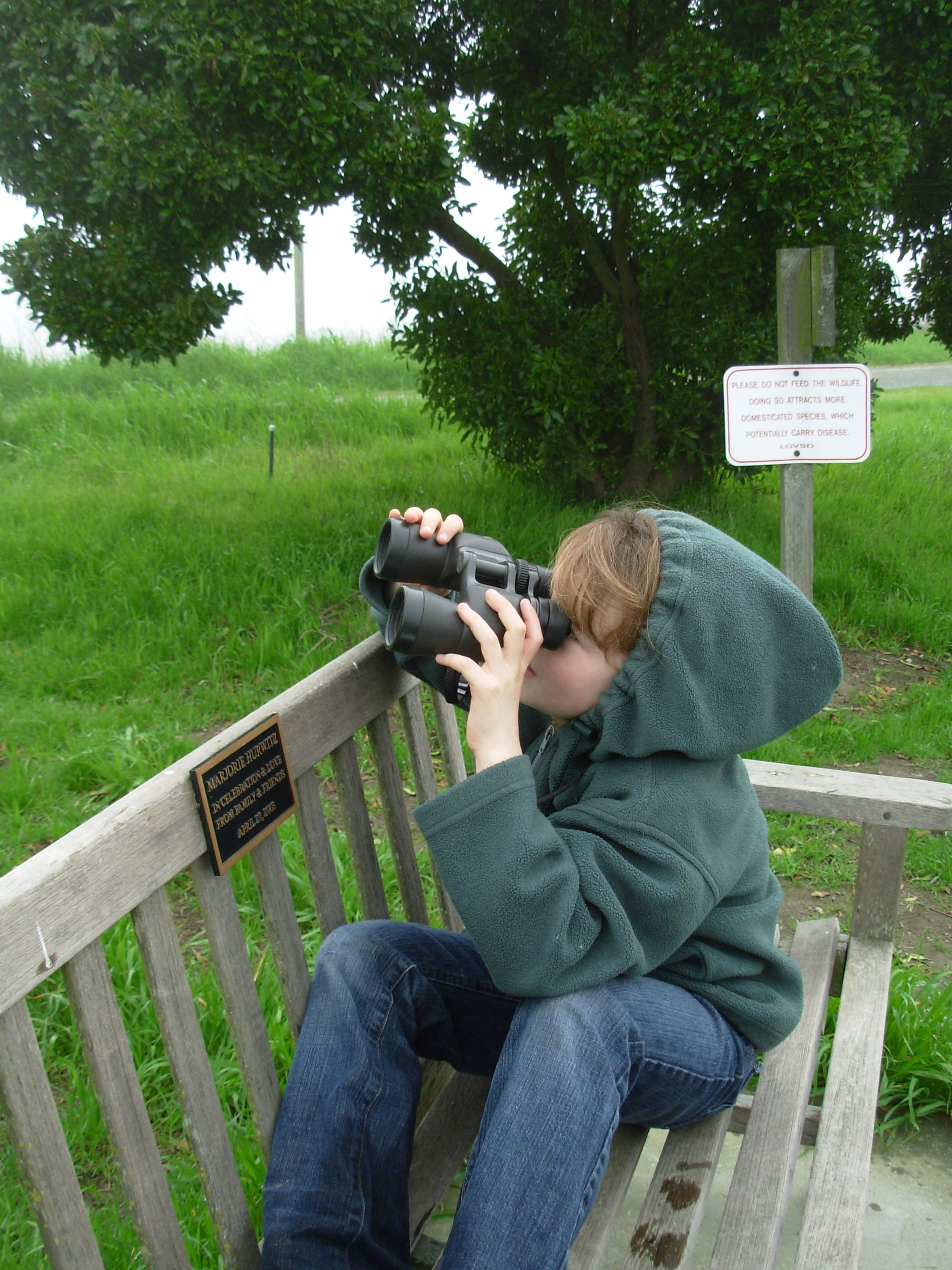 great backyard bird count archives slow family