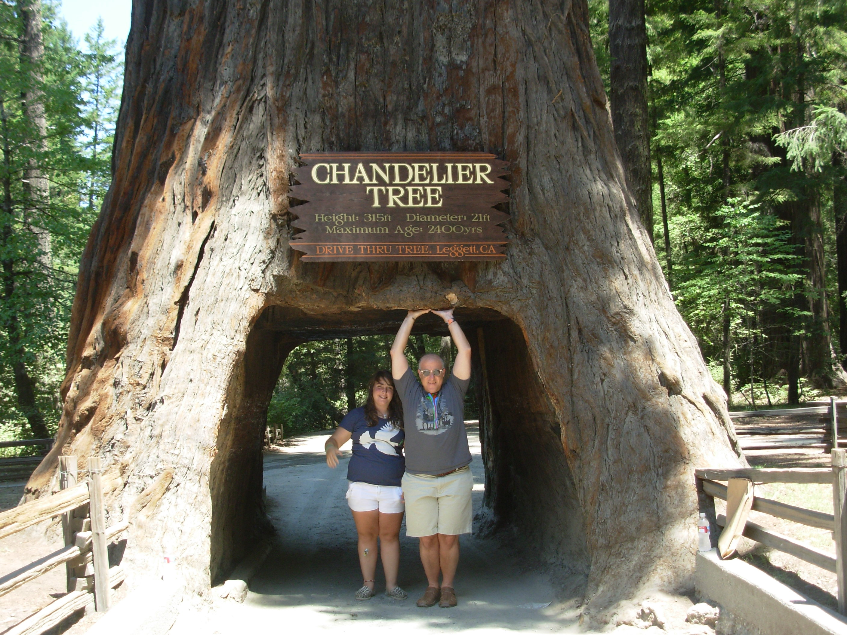 Happy 50th avenue of the giant redwoods slow family the arubaitofo Choice Image