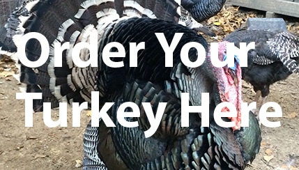 Order Your Turkey Here