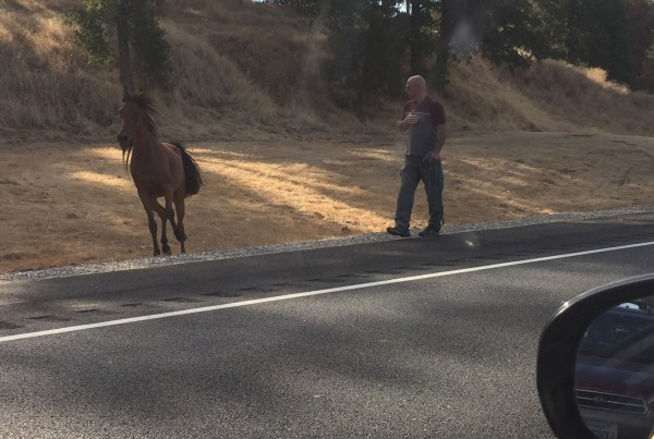 Awesome Sebastopol apples save the day saved the day of this errant horse.