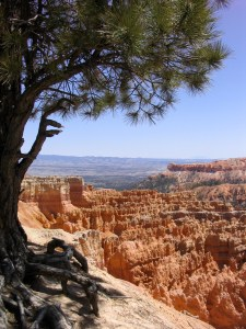 Bryce Canyon is cool - but I want to see the GRAND Canyon!