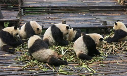 pandas2